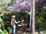 Star Higgins paints the vine