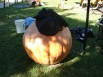 Some pumpkins still had a little ways to go