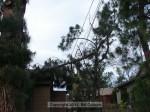 Tree down on power line, west side of Auburn