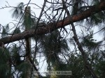 Same shot of tree on power line, zoomed in