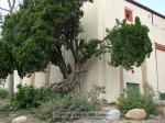 Sierra Madre School