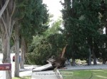 Another shot of a tree down on west Auburn