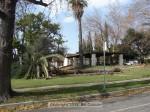 Palm tree down, Memorial Park
