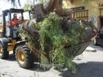 Adios, Amigo - The Pepper Tree is Gone