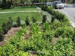 Creative Arts Group Showcases Spectacular Gardens - Photo Gallery