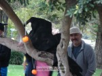 Pre-contest in the park - did not know Grim Reapers could climb trees